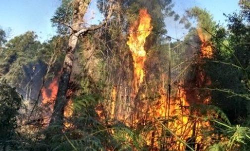 Bombeiros de Matos Costa combatem incêndio em plantação de eucaliptos