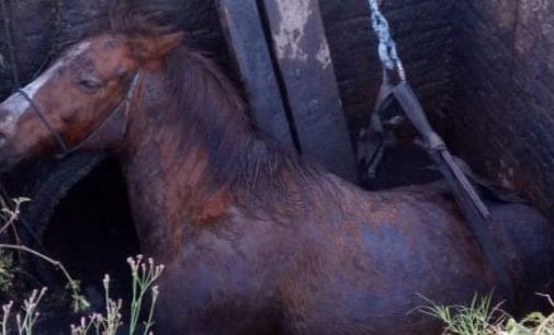 Defesa animal de União da Vitória auxilia no resgate de cavalo